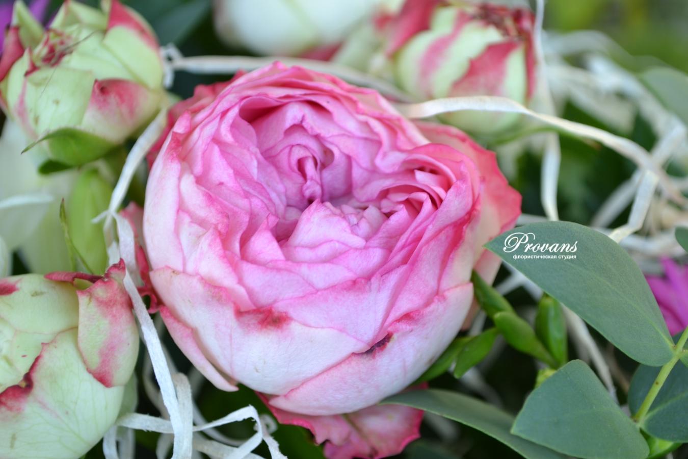 Букет в школу. Пионовидная роза, малиновая гербера