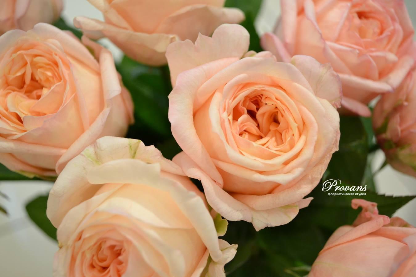 Ароматные французские розы