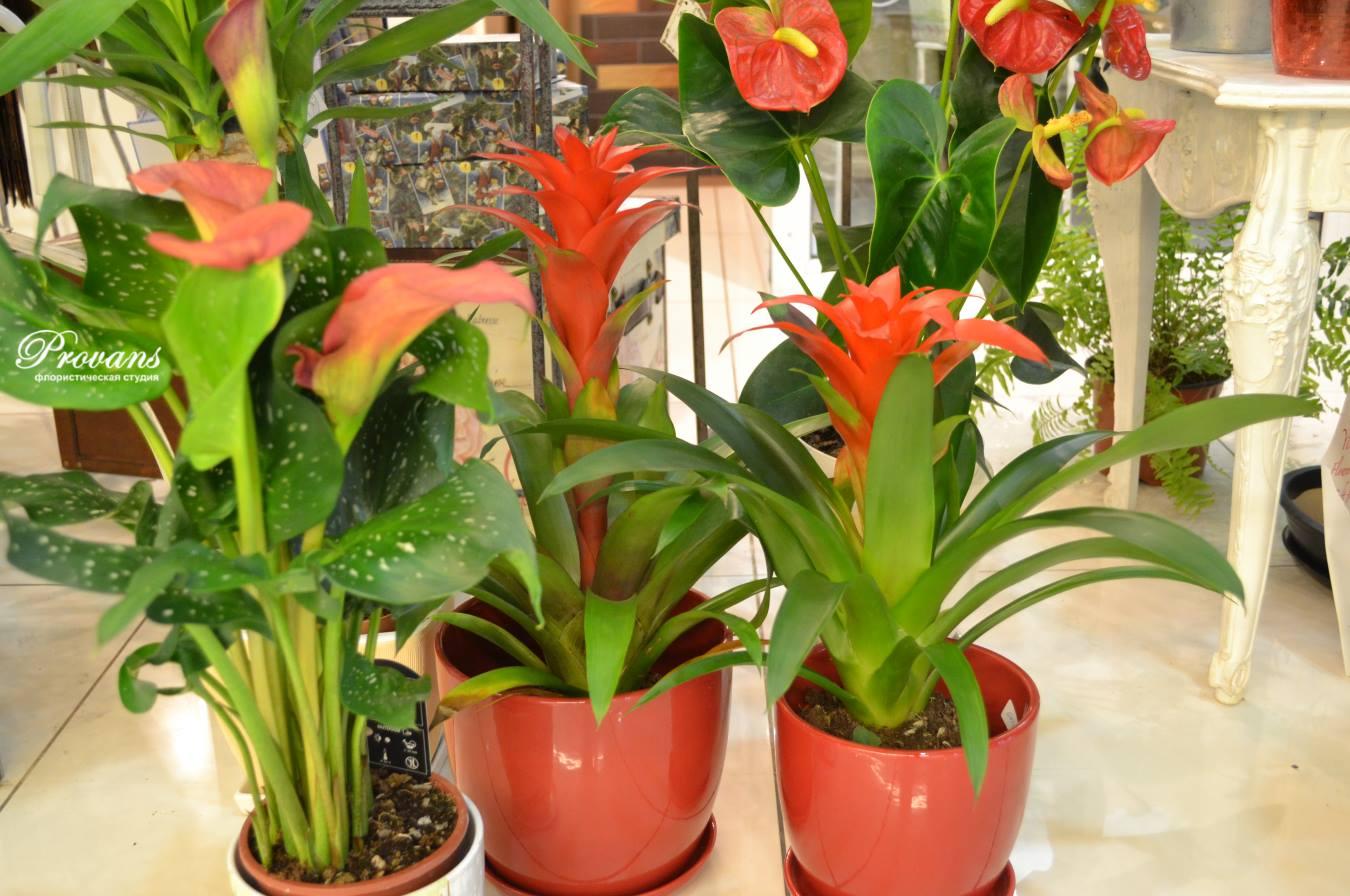 Уголок с комнатными растениями